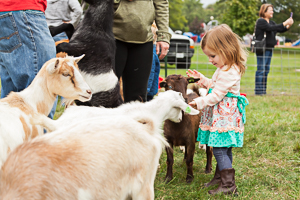 Petting zoo animals with kids